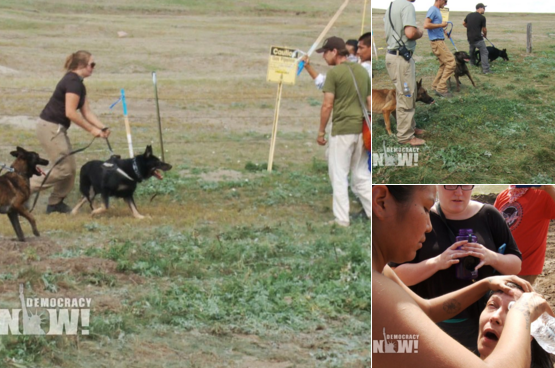 Pipeline Video Workers Attack Protesters Dog